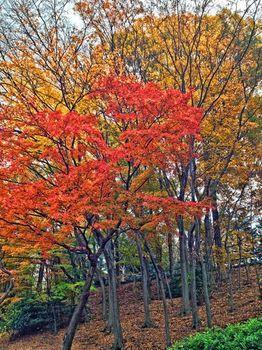 公園紅葉1.jpg