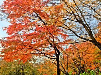 公園紅葉2.jpg