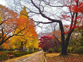 街路樹紅葉.jpg